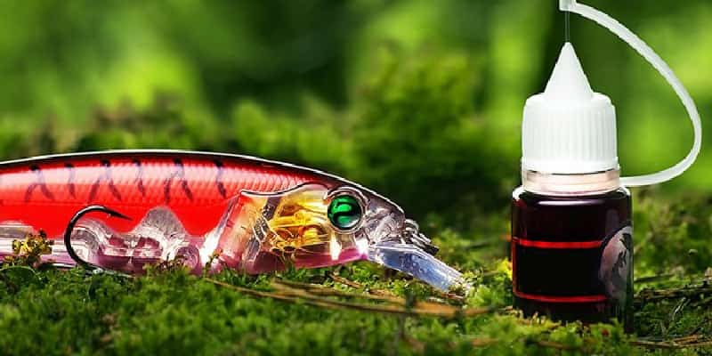 The best attractants for predatory fish