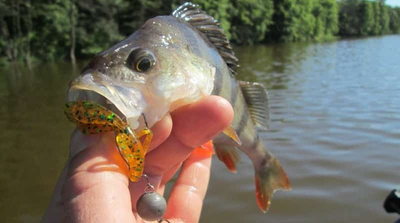 Search for fish and picking lures on lakes