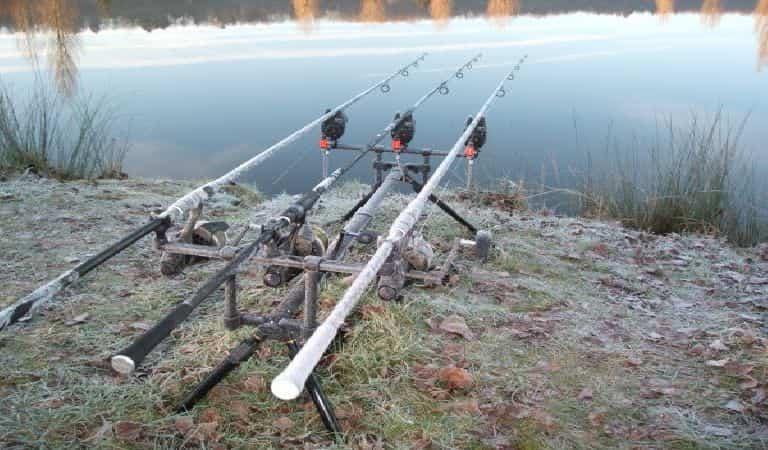 carp in winter