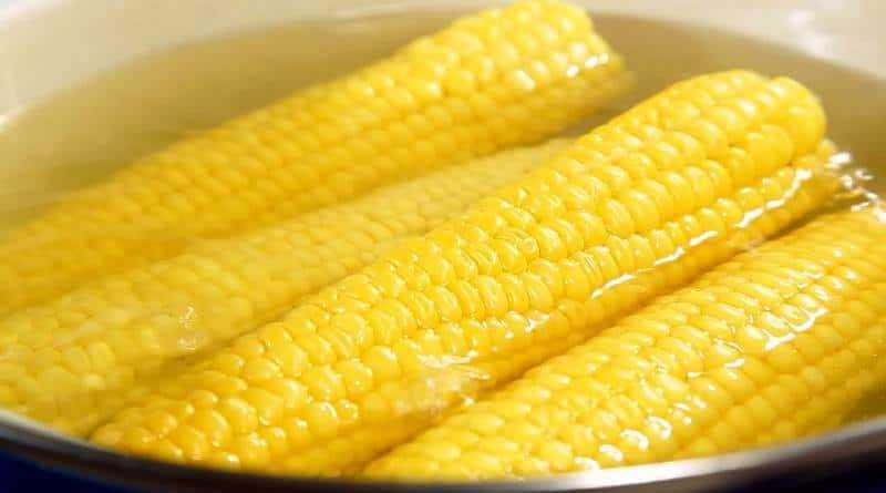 cozidos milho na espiga
