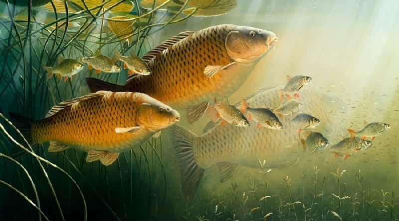 Qué son las feromonas de pescado