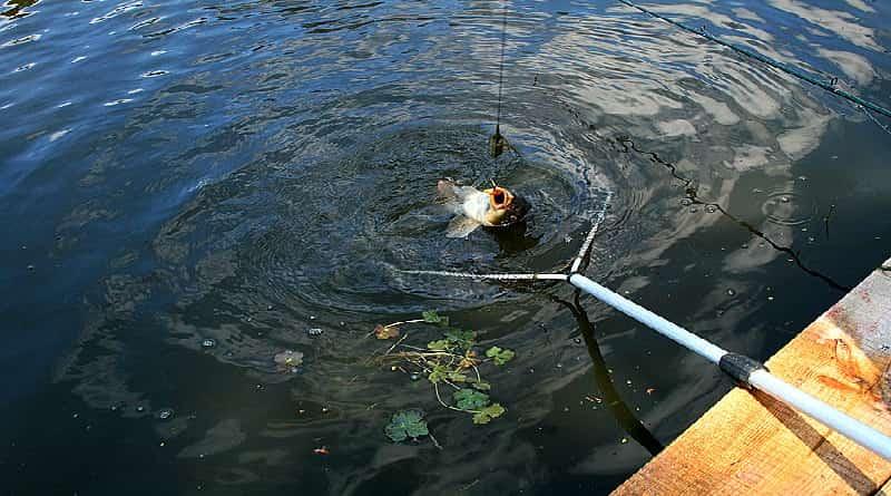Choosing a fishing spot on the river