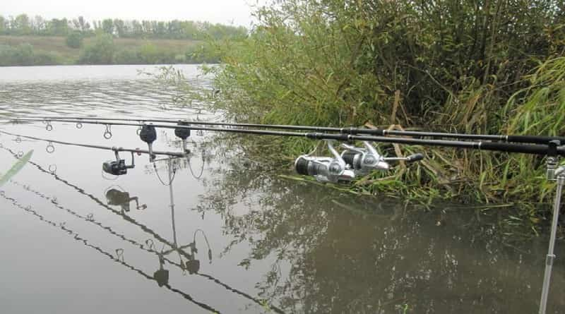 Comment attraper la carpe sur un lac sauvage