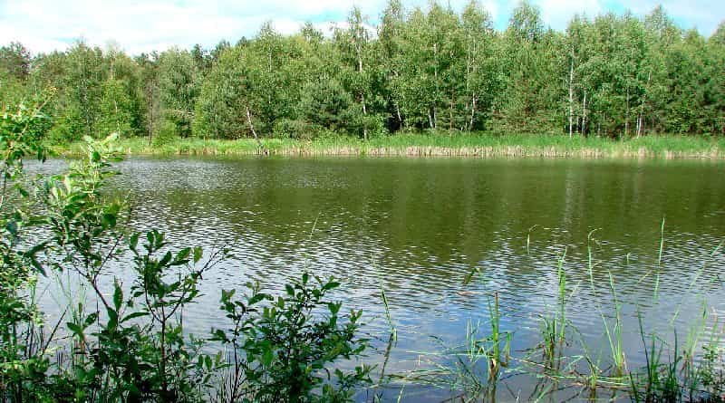 How to catch carp on a wild lake